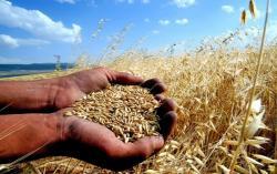 Buğdayda Alım Fiyatı Açıklandı!