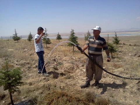 18 Ağustos 2013 Pazar Günü Sivri'mizde Piknik ve Ağaç Dikme Organizasyonu Yapılacak